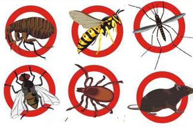 pest-control-gold-coast-image-44