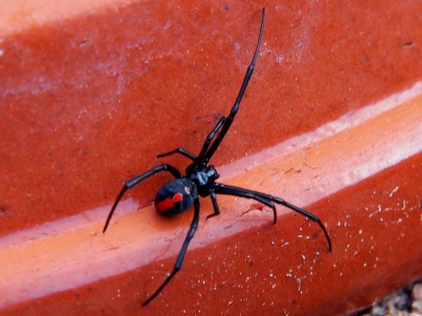 pest control image 57