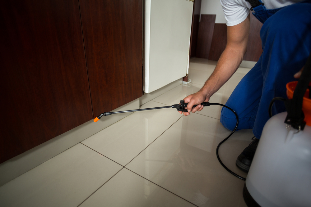 pest control services gold coast image 3
